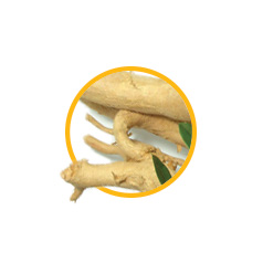 Экстракт корней эврикомы длиннолистной