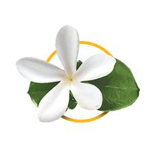 Гардения таитянская